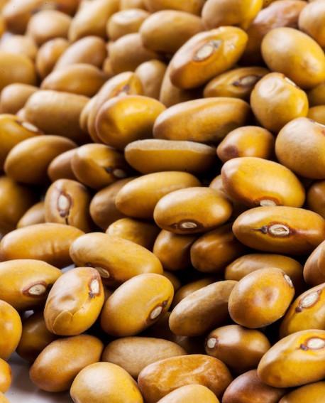 Fagioli bruni amarantini dei Volsinii  - 5Kg - Perle della Tuscia